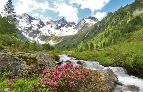 Bodengrund © Naturpark Zillertaler Alpen