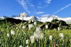 Schwarzensteinmoor © Naturpark Zillertaler Alpen